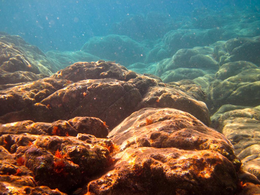 Подводный мир. Средиземное море
