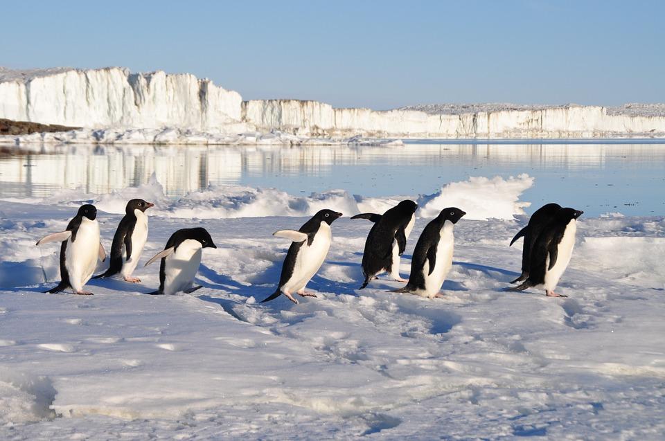 Арктические земли