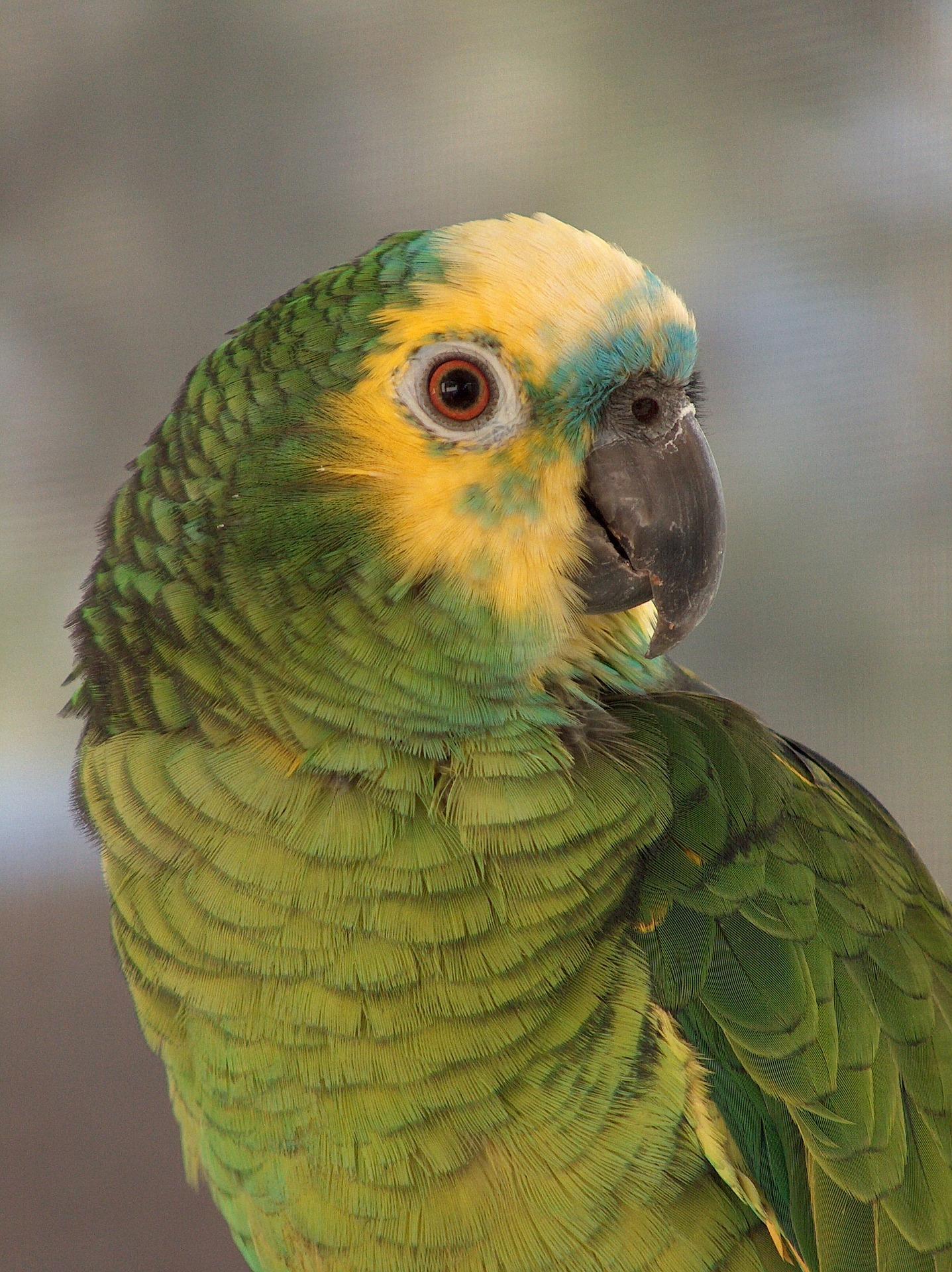 В Коста-Рике домохозяйка оштрафована на почти $ 2000 за незаконное содержание двух попугаев