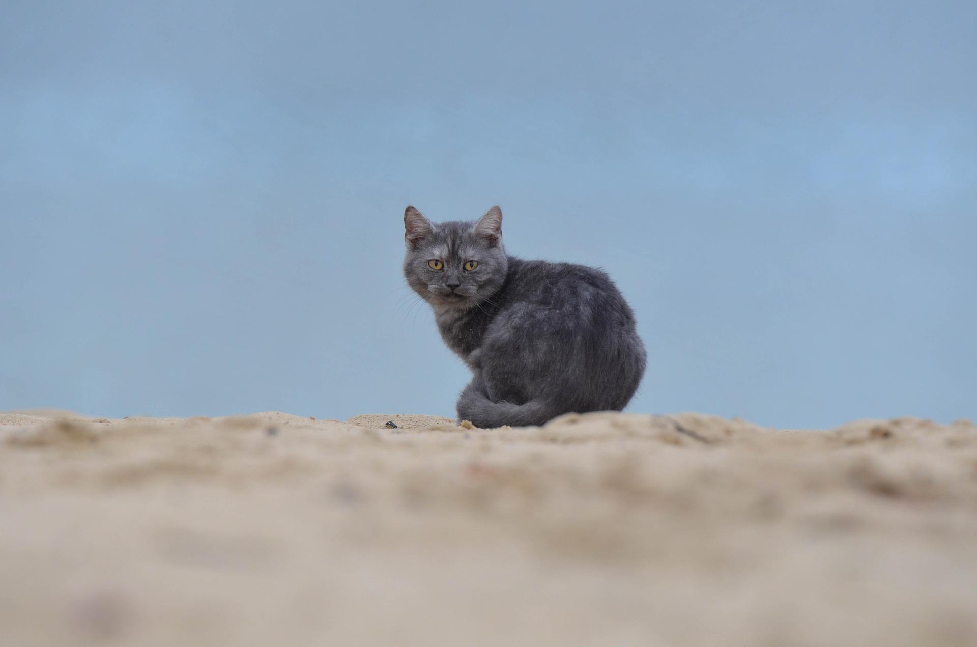 Кот из Нижнего Тагила занимается экстремальными путешествиями вместе с хозяином