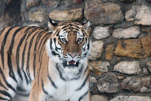 Маленькой амурской тигрице, родившейся в ростовском зоопарке, дали имя