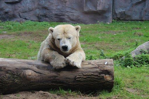 Московский зоопарк готов взять навоспитание бегавшего ссобаками медвежонка