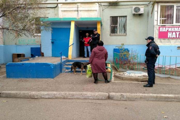 Собака Астрахань, социальные сети